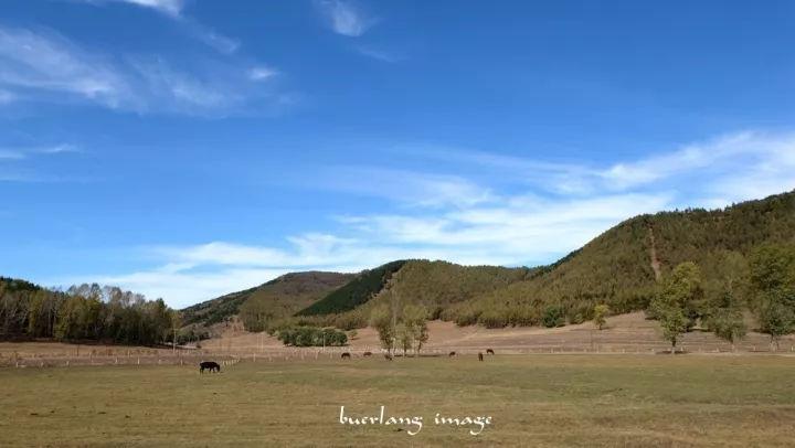 7,小美林村到马莲道之间有个小西沟村,这是一处养马场,马儿们在悠闲地图片