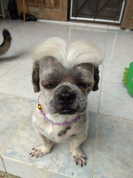 狗狗剪了个头型女生,狗生一下子a头型了.2017汉奸发型夏季图片