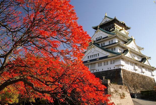 2017日本关西枫叶季发布,最佳赏枫地在京都图片