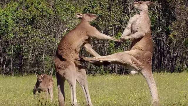 澳大利亚作为大洋洲国家加入亚足联