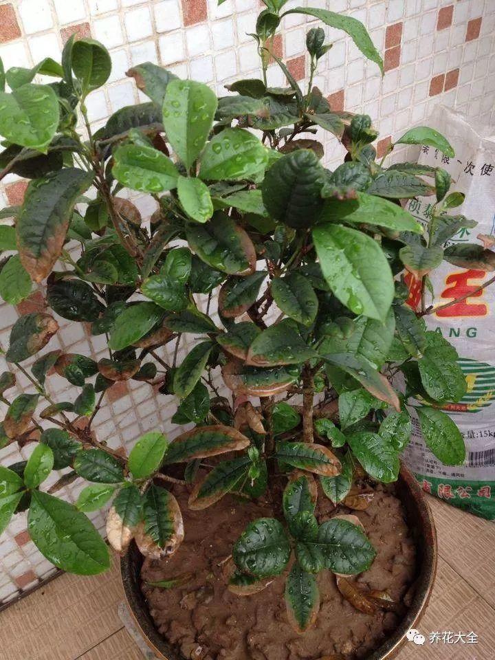 盆景 盆栽 植物 720_960 竖版 竖屏