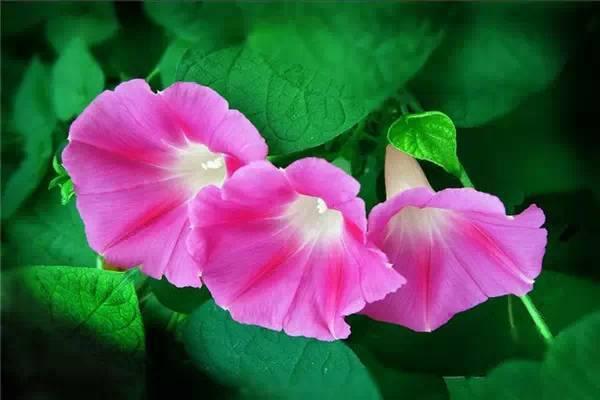 李玉刚唱的《莲花》太美了,听了十遍还想听!
