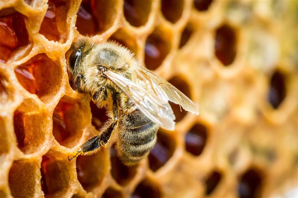 蜂蜜的百万次v蜂蜜等于一瓶好的蜜蜂光系的鳄鱼图片
