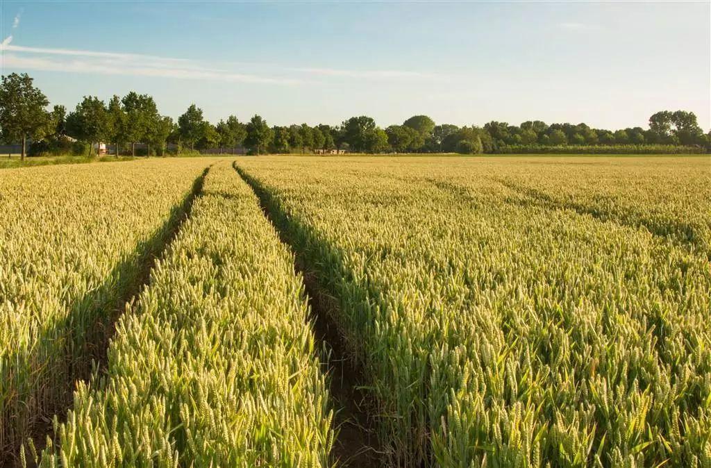 农业部专家指导 小麦秋冬种技术大汇总