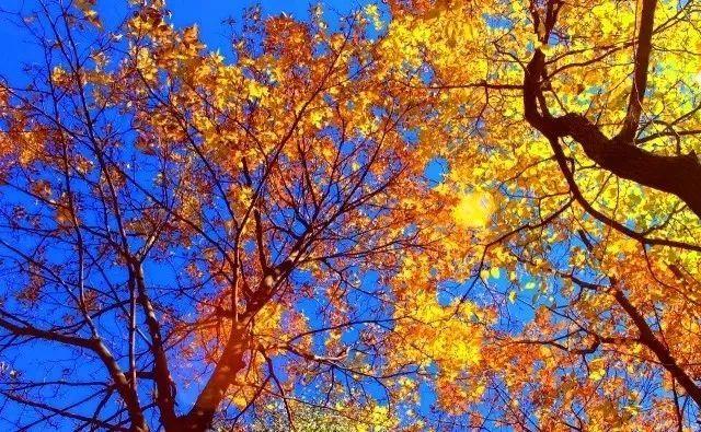 旅游 正文  一场秋雨一场寒 秋天的风景, 要和着温度来赏 清凉的风,吹