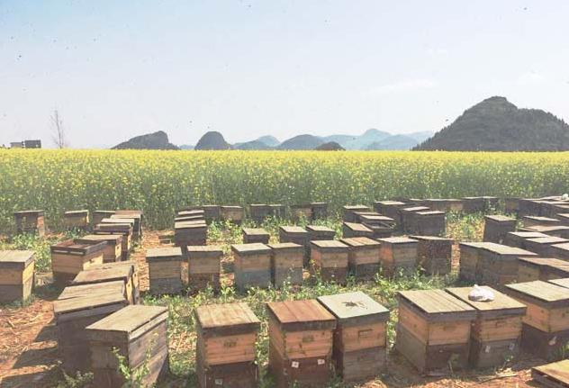 杜培良打造中国生态农牧业.商城,让互联网走进农业