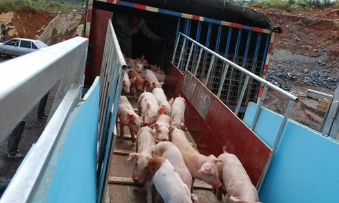 云南开远市首家温氏生猪养殖家庭农场正式落户