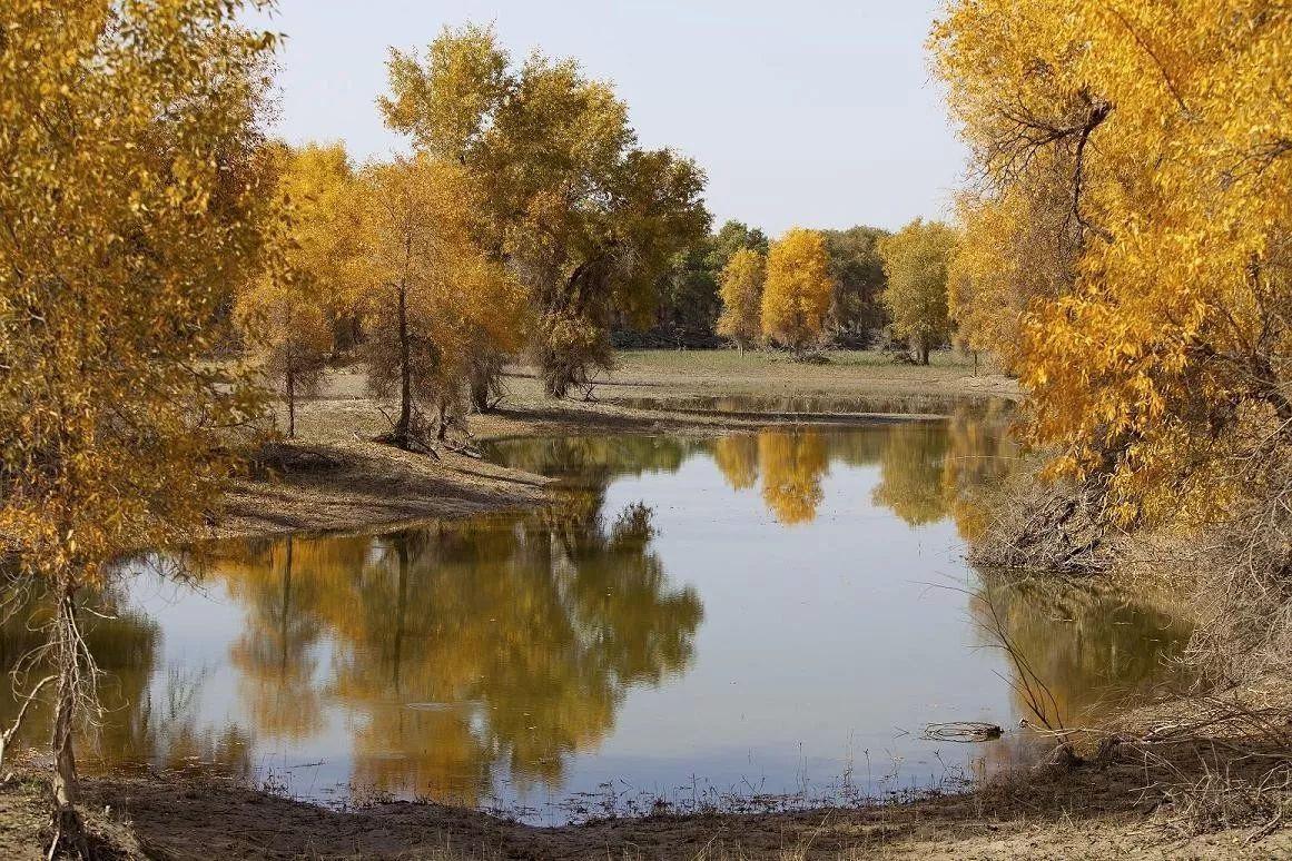 千万不要去秋天的南疆!因为太美了……