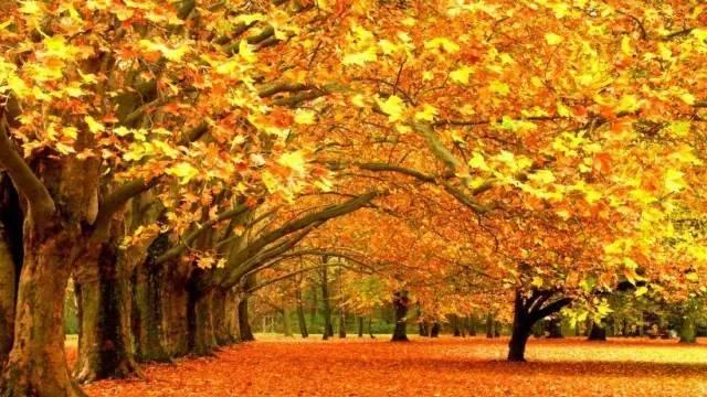 赞美秋天的诗句
