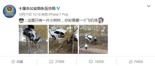 高难度车祸!轿车冲出路面飞上树 教练都不敢这么教