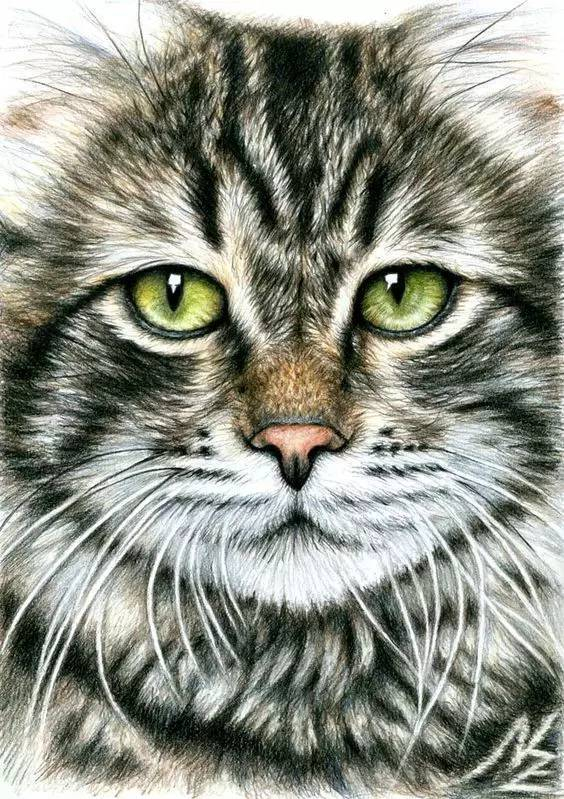 壁纸 动物 猫 猫咪 小猫 桌面 564_799 竖版 竖屏 手机图片