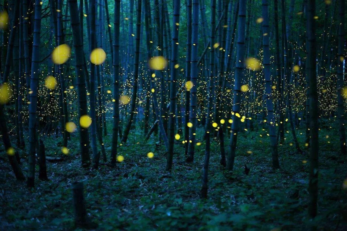 葫芦丝丨融融月光下,看竹叶飘摇