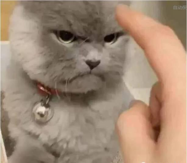 如果你想看看这个超凶的猫咪的笑容怎么办?