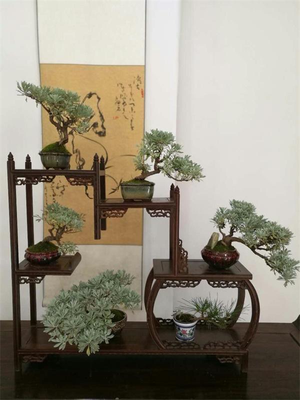 中国开封菊花节铁塔景区:禅茶文化、盆景艺菊将成主角