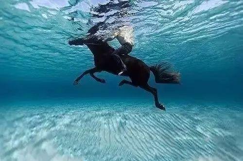 梦见湖里游泳的马