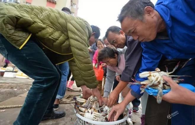 温州猛吃海鲜的季节到了!肥美螃蟹10元斤!会买的人都乐疯了!