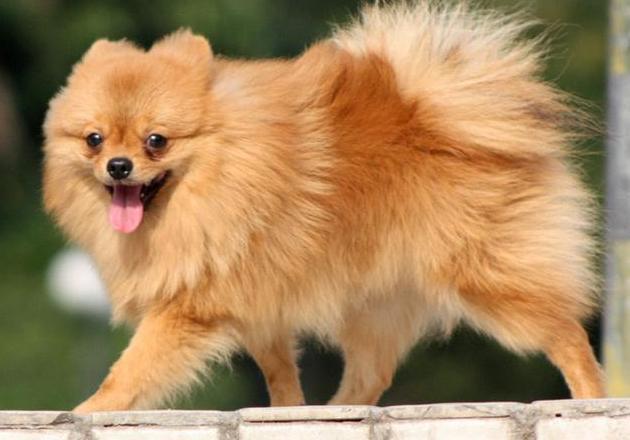 最看家的狗_看家狗图片