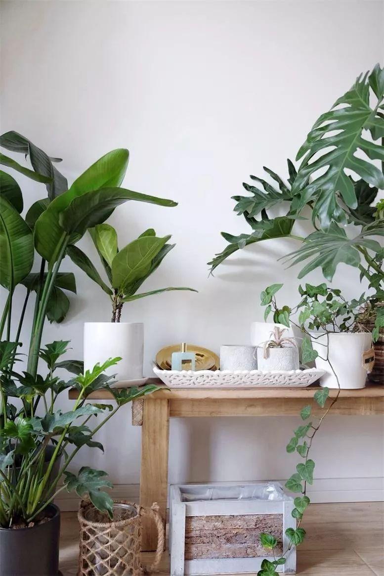 极简≠冷淡!用绿植也可打造鲜活的北欧风家居图片