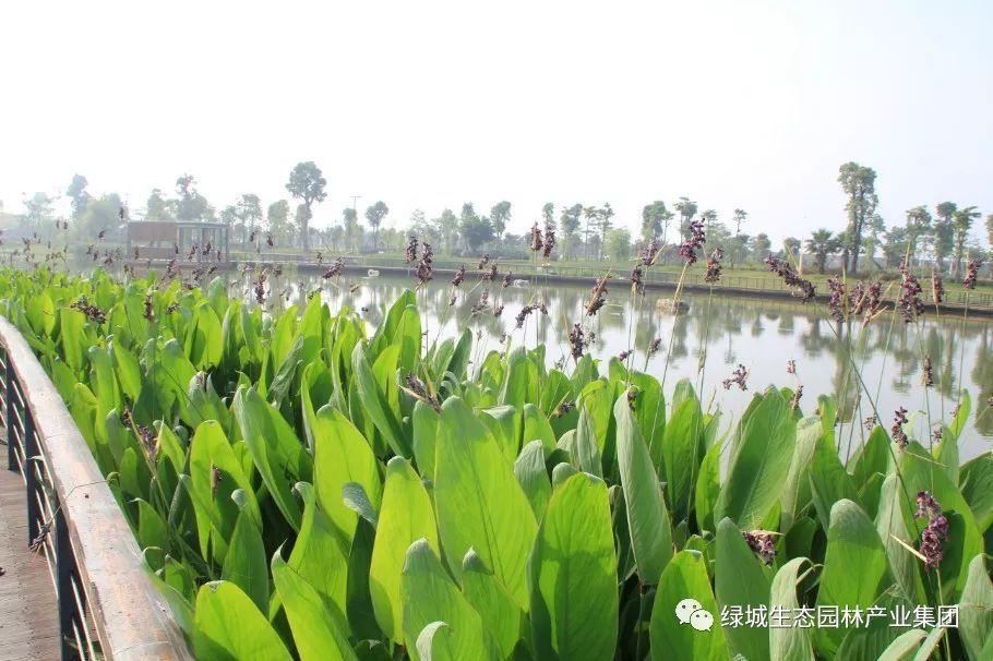 园林常用水生植物