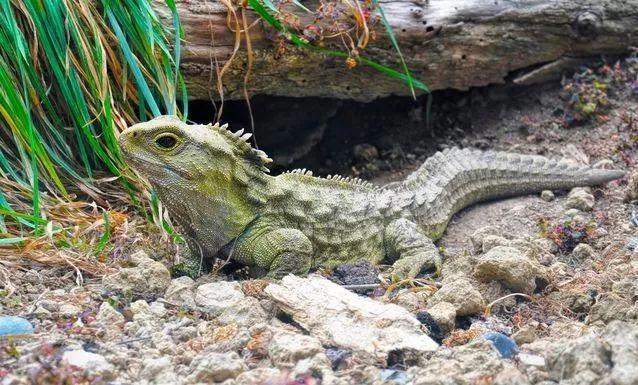 动物活化石都有哪些 什么动物是活化石