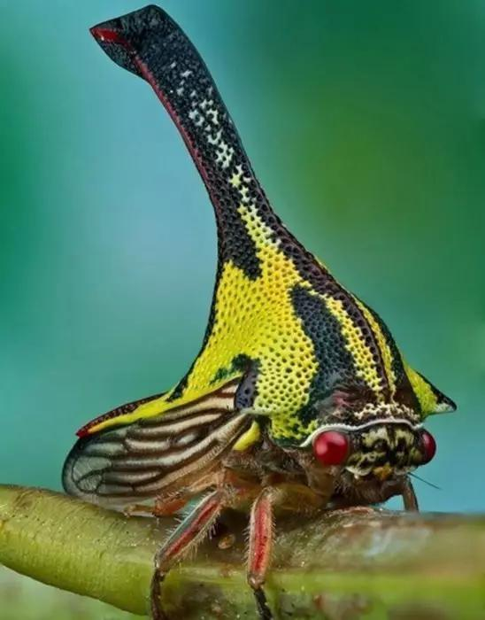 6,低地马岛刺猬,虽然它是哺乳动物,但却会像昆虫一样发出尖锐的声音.