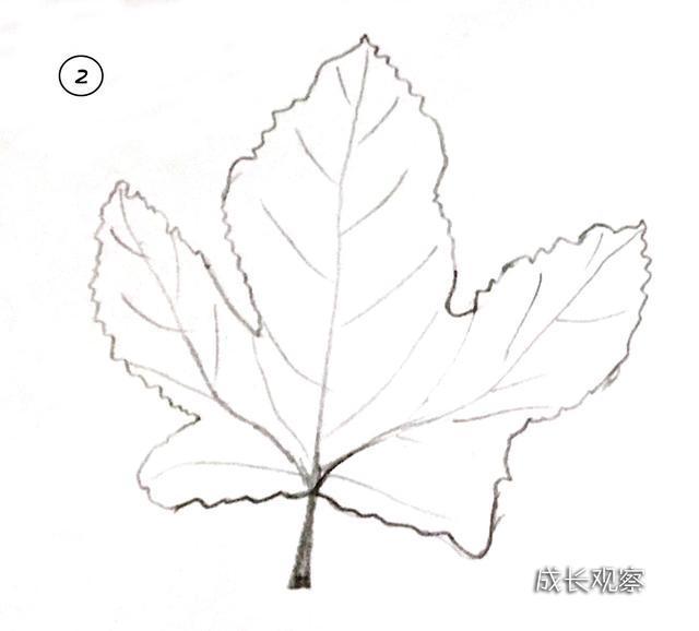 秋天来了 带宝宝一起画出各种各样的树叶简笔画吧
