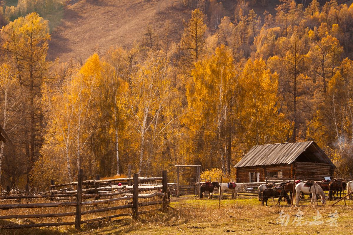 每一个曲折半开的木栅栏皆为松木,经历漫长岁月,变成了温暖的金黄色