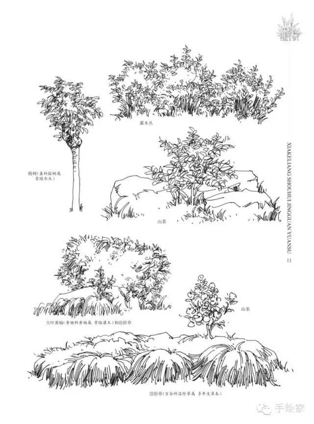 教育  来源《夏克梁手绘·景观元素·植物篇(上)》 如有侵权,请联系小