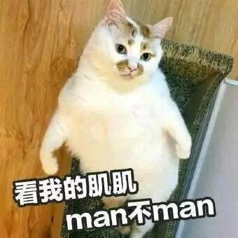 表情包|楼板猫表情包图片