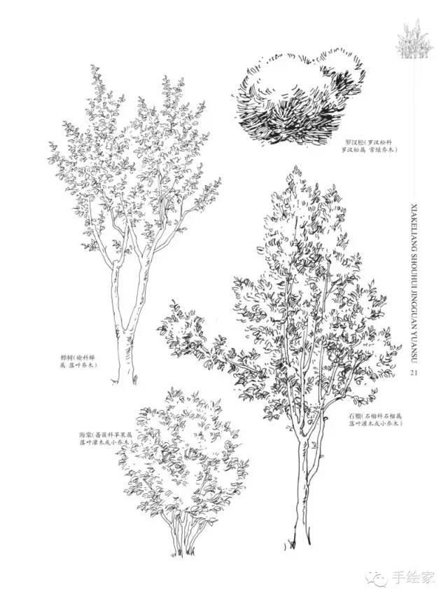 教育 正文  来源《夏克梁手绘·景观元素·植物篇(上)》 如有侵权,请