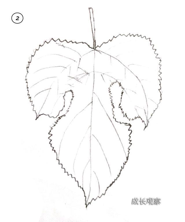 秋天来了 带宝宝一起画出各种各样的树叶简笔画吧图片