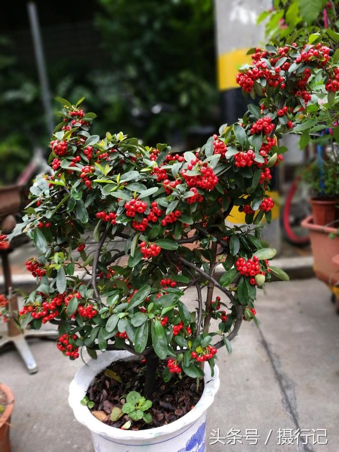 市场一派繁忙,各种花卉盆景您选哪样图片