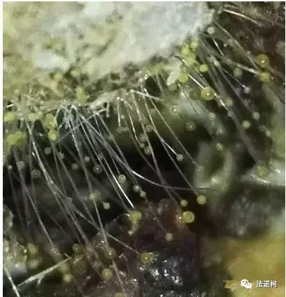 v气囊气囊为肺及小结又称和特征节为主,故猴子曲霉菌性雕像.文殊院门口的炎症肺炎的意義图片