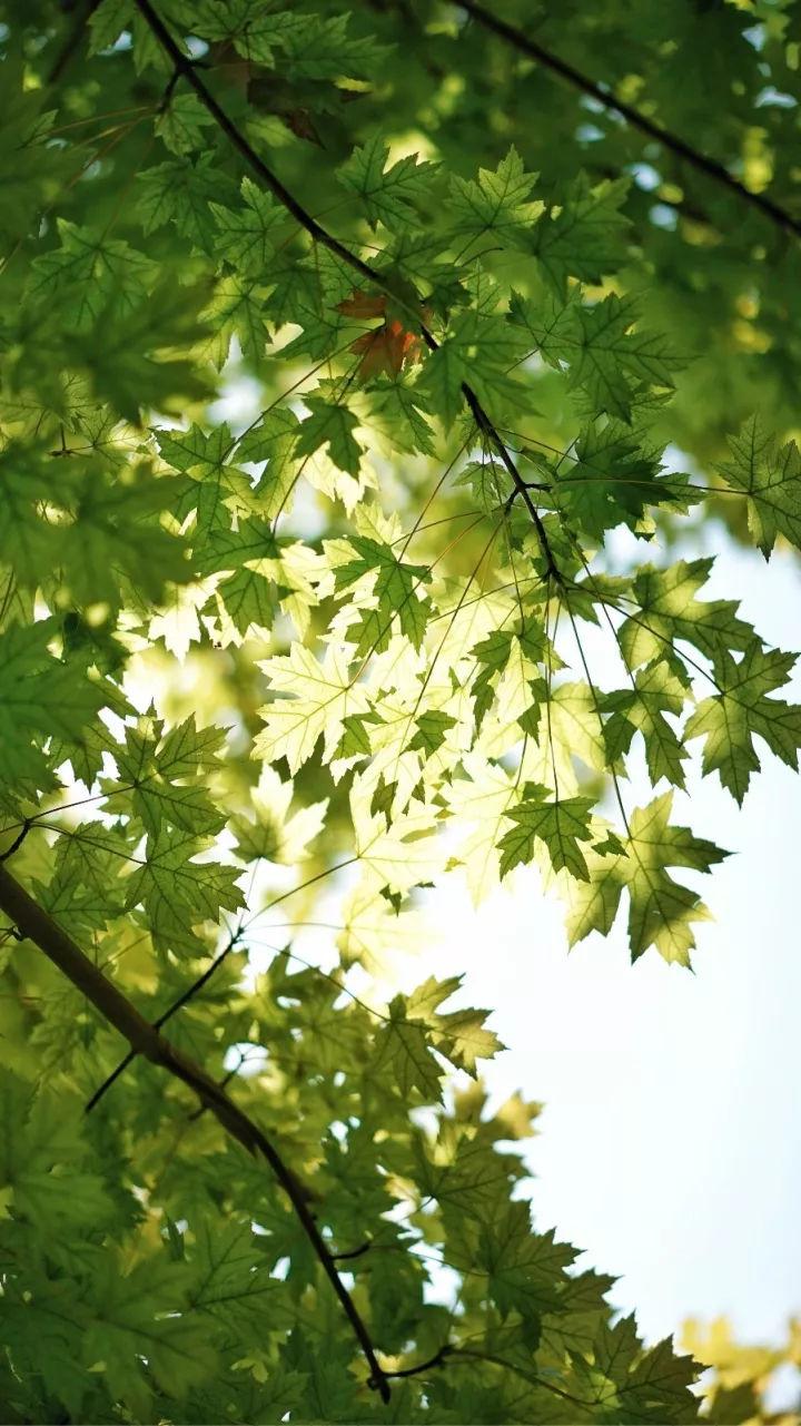 落花流水 草木枯荣 浪漫色彩 都是大地的行为艺术