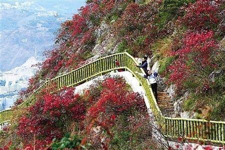 【提个醒】巫山国际红叶节 |下月17日开幕,千万别错过图片