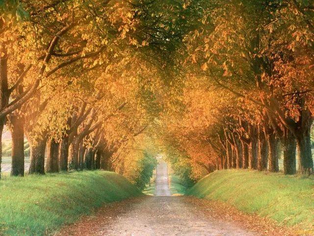 【感悟】中年:扬手是春,落手是秋