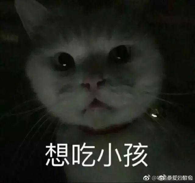 你连表情包里猫的名字都不知道,还敢说爱猫?图片