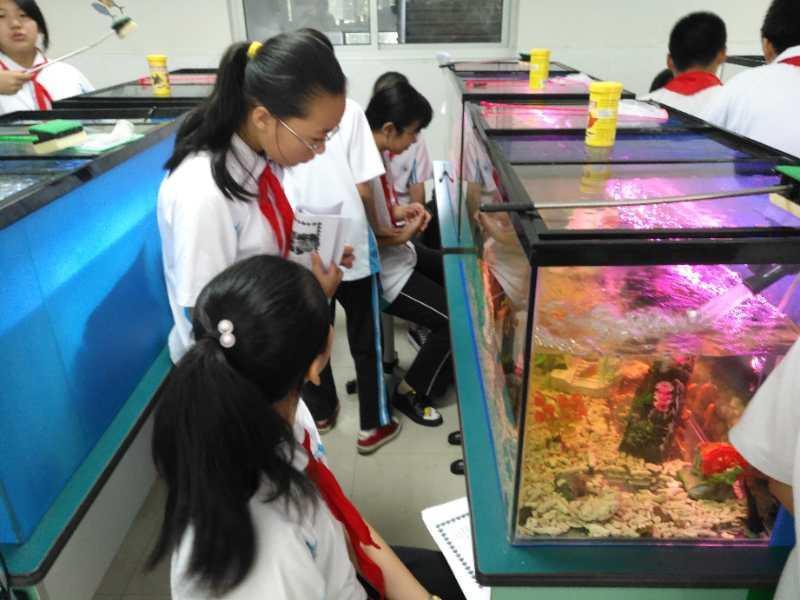 """教室改建成""""水族馆""""语文老师带头养鱼这样的创新实验室激发学生来探究"""