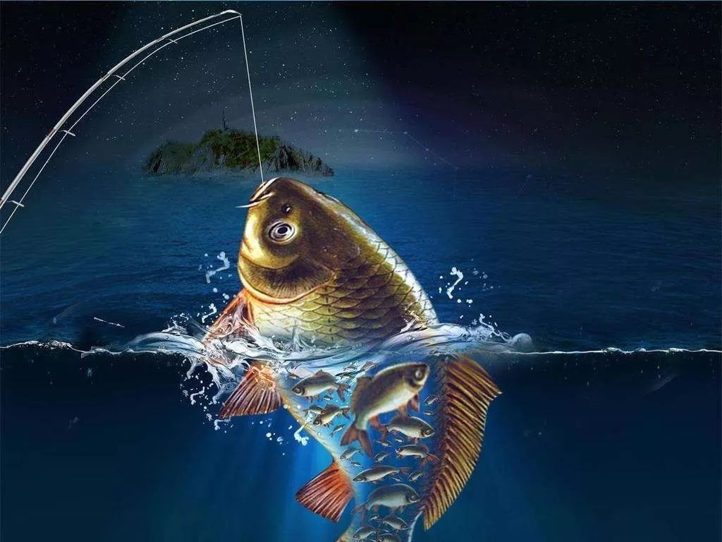 罕见的大鱼吃小鱼,有鱼的地方就有江湖