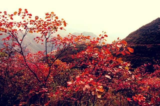 重庆旅游 亲爱的,今生想和你牵手走遍这些地方