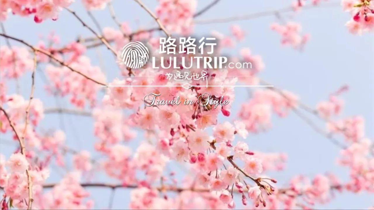 春光无限 | 南半球的完美赏春之旅