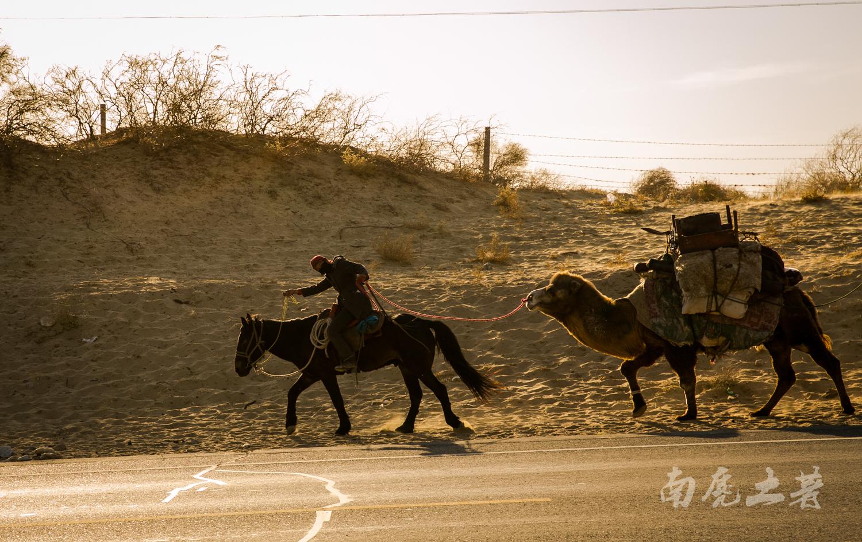 新疆畜牧转场季,场面堪比非洲野生动物大迁徙