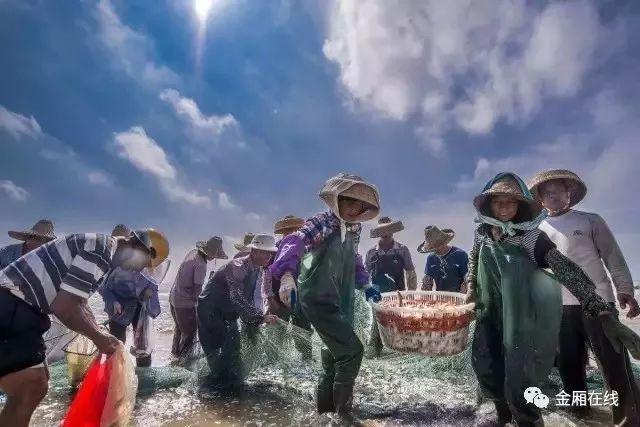 """金厢传统渔民""""牵大网""""浅海捕捞!"""