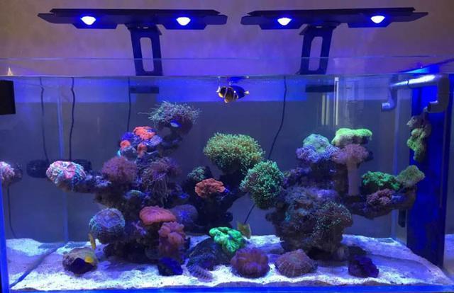 关于鱼缸照明系统的常识及误区深圳鱼悦水族告诉你