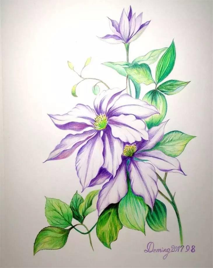 多练才能画的好,彩铅花卉学员作品展图片