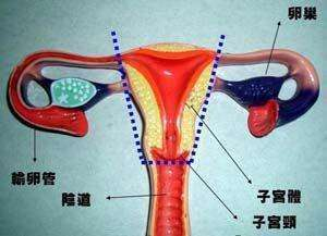切除子宫影响性生活吗