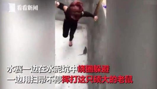 女子打扫卫生遭大老鼠攻击 用扫帚挥打也无法摆脱