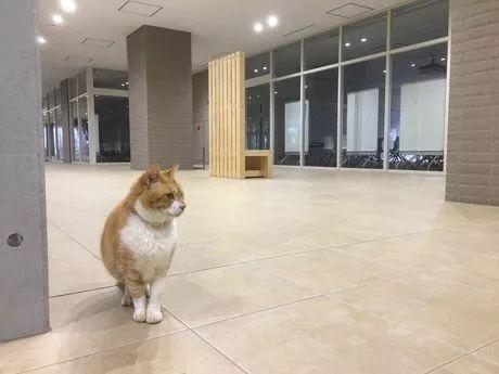 日本大学最自由的一位学生,这气场不服不行…