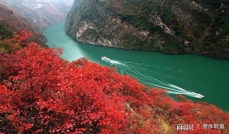 万人寻爱 神女见证——巫山红叶节图片