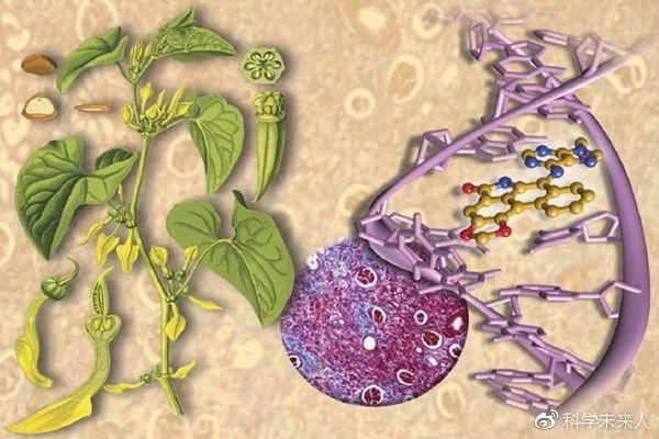 《Science Translation Medicine》发表台湾学者论文: 马兜铃酸致肝癌